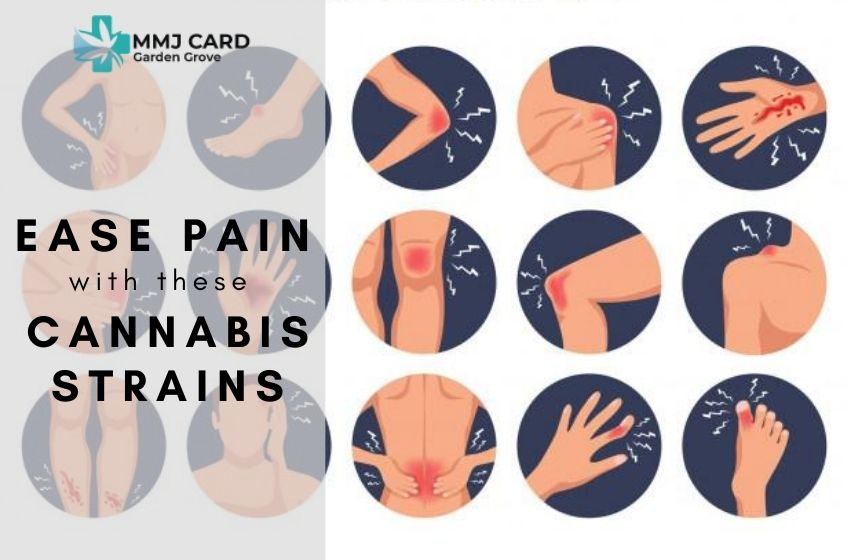 Top Cannabis Strains For Pain Relief You Should Try Today