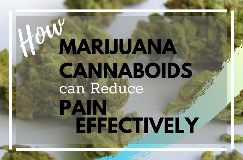 How Marijuana Cannabinoids can be Used to Reduce Pain Effectively