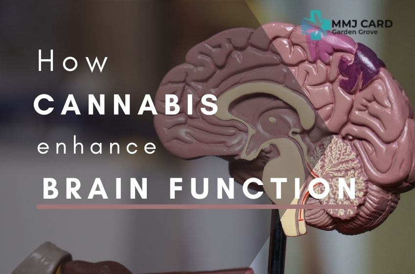 How Can Marijuana Help Improve Brain Function